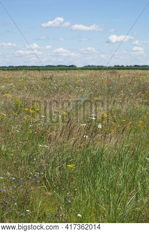 Picturesque Ukrainian Steppe On A Sunny Summer Day. Diverse Steppe Vegetation.