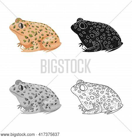 Vector Illustration Of Toad And Tropical Logo. Set Of Toad And Points Vector Icon For Stock.