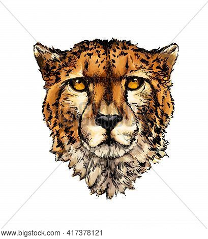 Cheetah Head Portrait From A Splash Of Watercolor, Colored Drawing, Realistic. Vector Illustration O