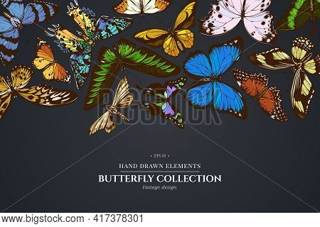 Design On Dark Background With Ambulyx Moth, Madagascan Sunset Moth, Forest Mother-of-pearl, Great O