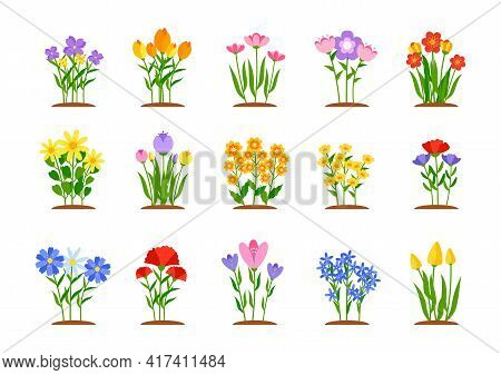 Set Of Spring Garden Flowers In Flat Style. Early Garden Flower Beds With Growing Colored Tulips, Da