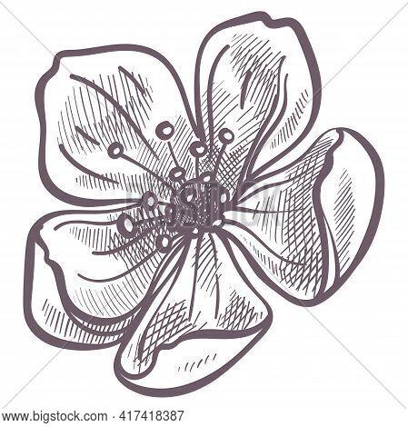 Flower In Blossom, Spring Season Flora In Bloom