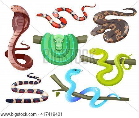 Snakes, Wild Tropical Serpents Isolated On White Background. Cobra, California Mountain Kingsnake, G