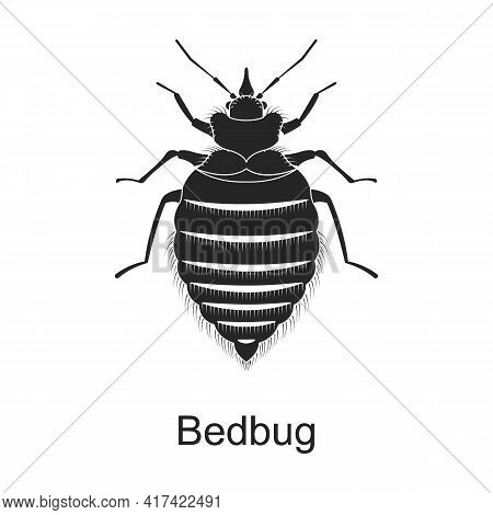 Bedbag Vector Black Icon. Vector Illustration Pest Insect Bedbag On White Background. Isolated Black