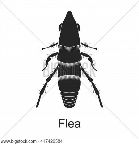 Flea Vector Black Icon. Vector Illustration Pest Insect Flea On White Background. Isolated Black Ill