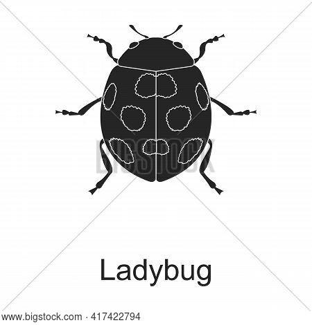 Ladybug Vector Black Icon. Vector Illustration Pest Insect Ladybug On White Background. Isolated Bla