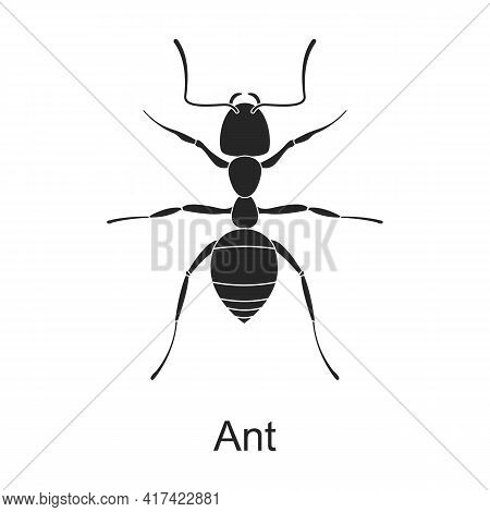 Ant Vector Black Icon. Vector Illustration Pest Insect Ant On White Background. Isolated Black Illus