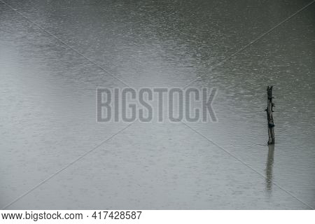 Nature Background With Tree Trunk In Lake Water Surface With Ripple And Rainy Circles. Snag In Gray