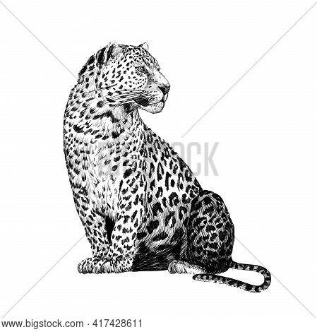 Hand Drawn Leopard, Sketch Graphics Monochrome Illustration On White Background (originals, No Traci