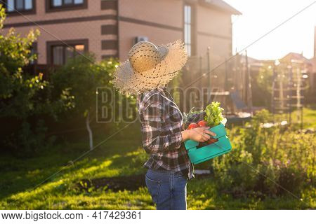Hardworking Young Woman Gardener In Straw Hat Picks Up Her Harvest Box Of Tomatoes On Sunny Summer D