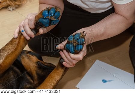 A Man Is Holding The Rottweiler's Front Paws In His Hands. The Dog's Paws Are Painted Blue. The Pet