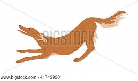 Playful Irish Red Setter Isolated On White Background. Hunting Dog. Purebred Doggy. Colored Flat Vec