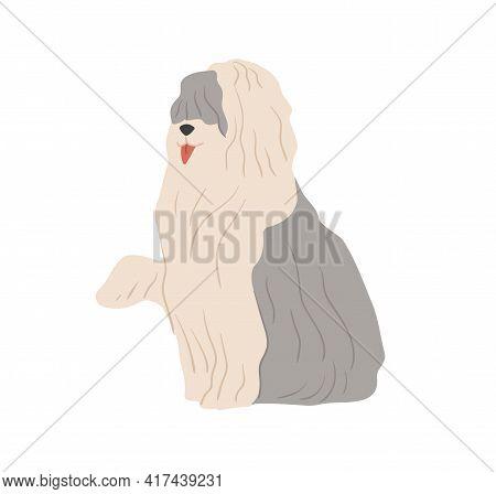 Old English Sheepdog, Or Bobtail. Shepherds Sheep Dog With Long Shaggy Coat. Flat Vector Illustratio