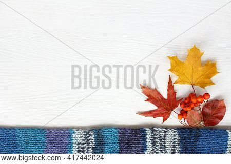 Blue Scarf With Maple Leaves And Rowan Berries On The Table Top View. Place For An Inscription In Au