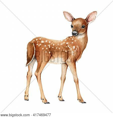 Young Forest Deer. Beautiful Fawn Image. Watercolor Bambi Illustration. Wild Young Deer Animal With