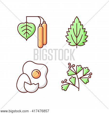 Intolerance For Allergen Rgb Color Icons Set. Birch Pollen. Nettle Leaf. Cracked Egg. Growing Sagebr