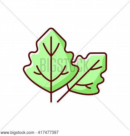 Lambs Quarters Rgb Color Icon. Cause Of Allergic Reaction. Lambsquarters, Goosefoot Leaves. Botany,