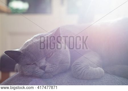 Lazy Pet Cat Resting In Sunlight On A Table Inside Room In The Home