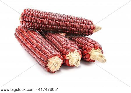 Red Corn Isolated On A White Background.cobs Of Ruby Queen Or Red Sweet Corn. Grains For Planting Co