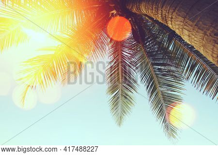 Tropical Palm Tree With Sun Light On Sunset Sky And Cloud With Colorful Bokeh Abstract Background. S