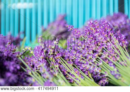 Bouquet Of Lavender A Turquoise Background. Flatlay French Provence Style Flower Blossom. Lavender A