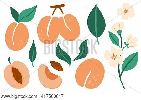 Apricot Set. Exotic Tropical Peaches Or Apricots Fresh Fruit Collection. Whole Juicy Peach With Gree