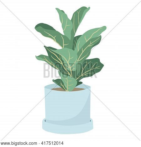 Vector Illustration Isolated On White Background. Trending Houseplant In A Pot, Lyre Ficus Or Fiddle