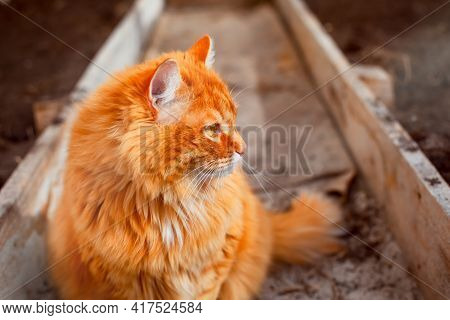 Ginger Cat Sitting In A Greenhouse And Looking To The Right
