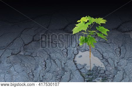 Against All Odds Metaphor And Persistence To Survive Symbol As A Sapling Growing Out Of An Asphalt P