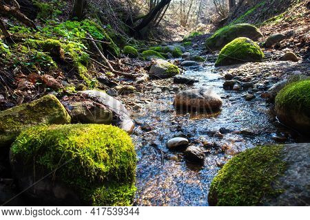 The Landscape Of Spring Woodland. Spring Stream. Trees At Hillside. Pure Source Of Water.