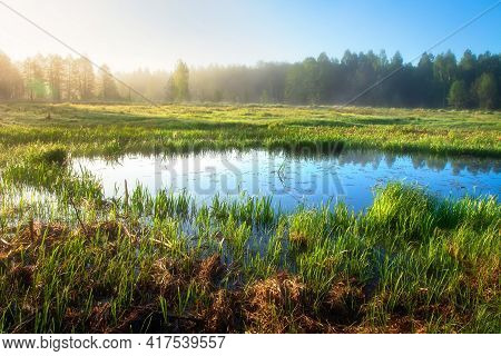 Spring Landscape. Fresh Foggy Sunrise. Flooded Meadow Surrounded Forest. Spring River Flood In Woodl