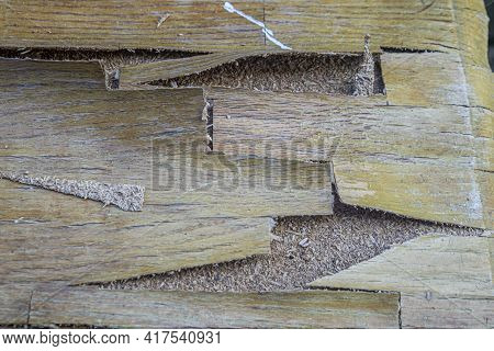 Furniture Wood Peeled And Damaged By Rot Or Termite