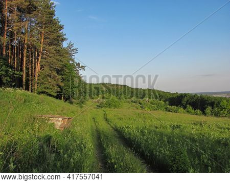 Green Meadow And Thick Pine Tree Forest