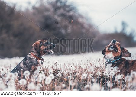 Two cute, happy dogs have fun on a fluffy dandelion field.