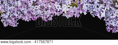 light lilac flowers isolated on black background