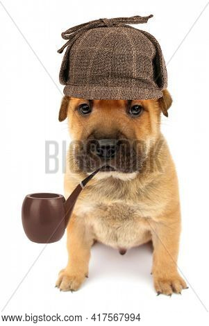 Cute dog puppy detective with pipe isolated on white background conceptual photo