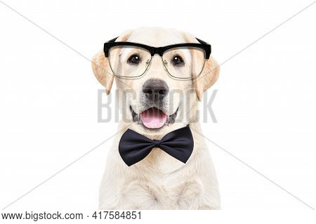 Portrait Of A Cute Labrador Puppy Wearing Glasses And A Bow Tie On A White Background