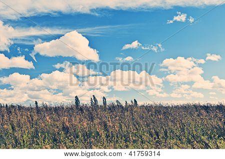 Set Aside Field