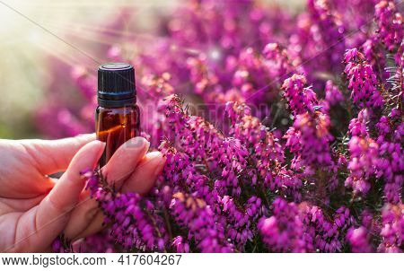 Herbal Medicine, Natural Cosmetic, Phytotherapy - Pink Heaths Flower And Bottle.