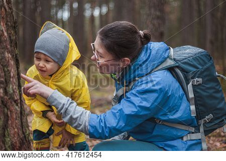 Mom And Child Walking In The Forest After The Rain In Raincoats Together, Looking At The Bark Of A T