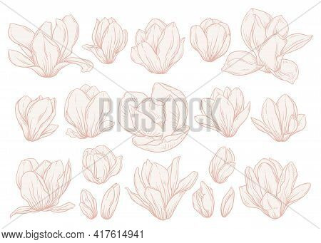 Set Of Magnolia Flowers On White Background. Floral Drawings In Beige Colors, Sketch Style. Elements