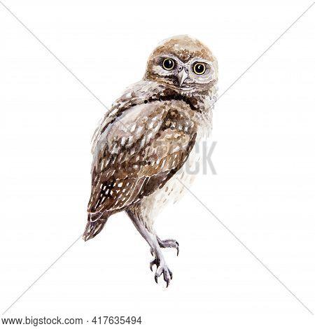 Owl Bird Watercolor Illustration. Small Wild Nature Bird Element. Hand Drawn Avian Predator Sitting