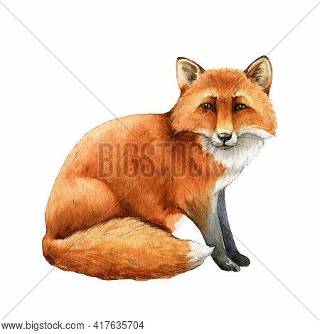 Red Fox Animal. Watercolor Illustration. Wild Cute Fox Sitting. Wildlife Furry Animal With Red Fur A