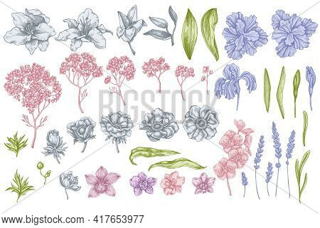 Vector Set Of Hand Drawn Pastel Anemone, Lavender, Rosemary Everlasting, Phalaenopsis, Lily, Iris St