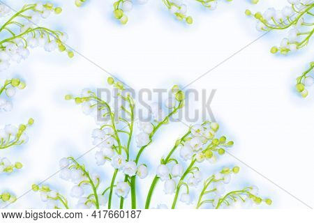 Lily Of The Valley Flower On White Background. Nature