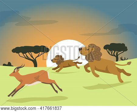 Two Cartoon Lions Hunting In Africa Flat Vector Illustration. Lion Pride Chasing Antelope At Sunset