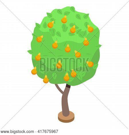 Yellow Pear Fruit Tree Icon. Isometric Of Yellow Pear Fruit Tree Vector Icon For Web Design Isolated