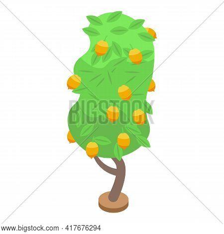 Lemon Fruit Tree Icon. Isometric Of Lemon Fruit Tree Vector Icon For Web Design Isolated On White Ba