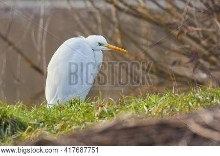 Bird, great egret stadinf on a the shore