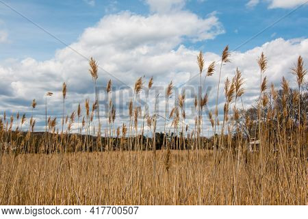 Dry grass with beautiful clouds and blue sky